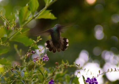 IMG_6179-Hummingbird