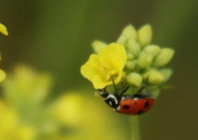IMG_9997ladybug